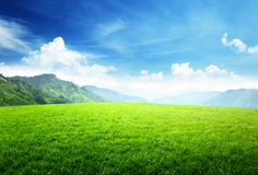 Field of grass in mountain royalty free stock images