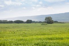 Field grass. And mountain on sky background Royalty Free Stock Images
