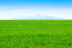 Field of grass and perfect blue sky Royalty Free Stock Photography