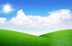 Field of grass and perfect sky Stock Photos