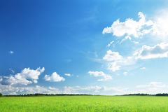 Field of grass. And perfect sky Royalty Free Stock Photo