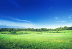 Field of grass Stock Photography