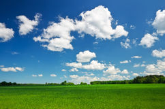 Field of grass and perfect sky Royalty Free Stock Photography