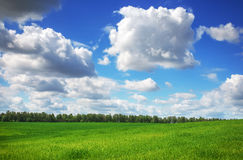 Field of grass and perfect sky stock photography