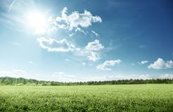Field of grass and perfect sky. Europa Stock Image