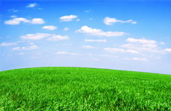 Field of grass and perfect sky Royalty Free Stock Image