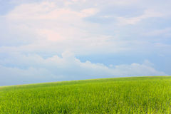 Field of grass and perfect sky Royalty Free Stock Photos