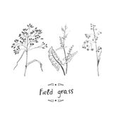 Field grass The picture is made in classic graphic style. Royalty Free Stock Image
