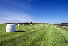 Field of grass rolls Royalty Free Stock Images