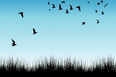 Field of grass and silhouettes of flying birds Stock Photo