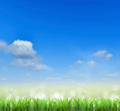 Field.Grass and sky.  background. Green grass growing under clear blue sky background Royalty Free Stock Images