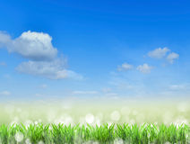 Field.Grass and sky.  background Royalty Free Stock Images