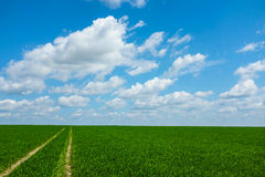 Field of grass with sky Royalty Free Stock Photography