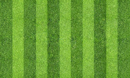 Field of grass Stock Image