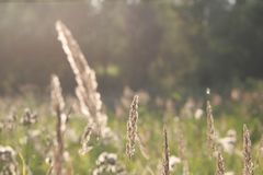Summer field royalty free stock image