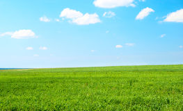Field of grass and summer day Royalty Free Stock Photography