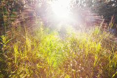 Field of grass in sunlight Royalty Free Stock Photography
