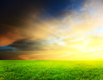 Field of grass and sunset Stock Image
