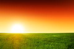 Field of grass and sunset Royalty Free Stock Photo