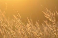 Field of grass. Stock Photos