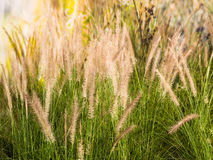 Field of grass during sunset Stock Photography