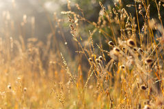 Field grass and sunshine Royalty Free Stock Photos