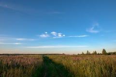 Summer landscape. Field grass trail. Field grass trail. Field grass trail on colorful background. Natural green grass field background. Grass, fall, trail stock photos