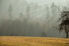 Field, forest and the sun. Field of grass, trees, fog and the sun stock photo