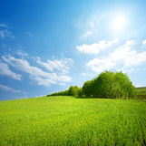 Field of grass and trees stock image