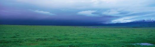 Field of grass u Royalty Free Stock Image