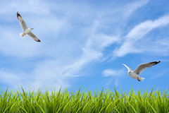 Field of grass under sky and flying birds Stock Images