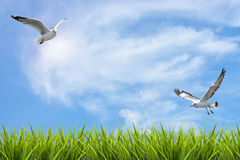 Field of grass under sky and flying birds Royalty Free Stock Photo