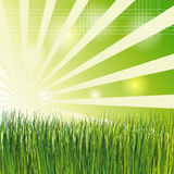 Field of Grass, Vector. Vector illustration of a green grass field Stock Images