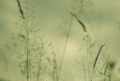 Field grass/vegetation detail Stock Photos