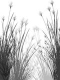 Field grass on a white background isolated Stock Image