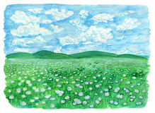 The field or grassland or pasture with daisy flowers and cloudy sky Stock Images