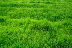 field green Fotografering för Bildbyråer
