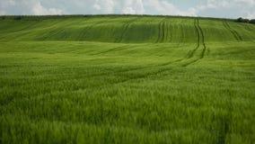 field green Royaltyfri Foto
