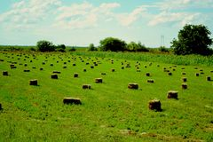 field green Royaltyfri Foto