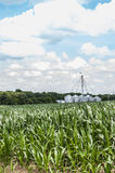 Field of green corn with a bright blue sky Royalty Free Stock Photos