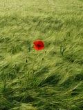 Field, Green, Ecosystem, Grassland stock photos