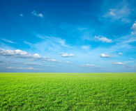 Field of green fresh grass Stock Photography