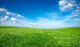 Field of green fresh grass Royalty Free Stock Images