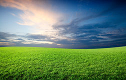 Field of green fresh grass Royalty Free Stock Photography