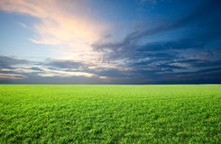 Field of green fresh grass on sunset royalty free stock photography