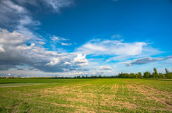 Field of green fresh salad and idustrial background stock photos