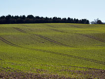 Field of green freshly grown grass Royalty Free Stock Images