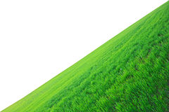 Field of a green grass Royalty Free Stock Photography