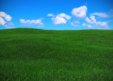 Field of green grass. And blue sky Stock Photography