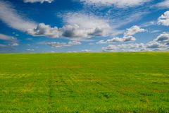 Field of green grass Royalty Free Stock Photos